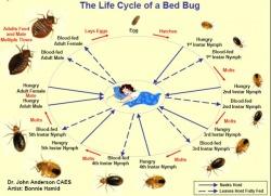 Call Nature's Way Pest Control Bedbug Exterminators