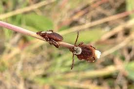 Tick Pest Control