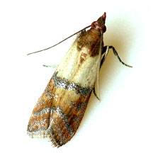 Pest Control services for moths