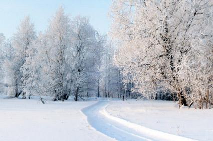 Winter Pest Control Tips