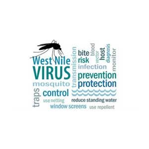 Mosquito FAQs