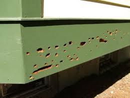 Carpenter bee nest