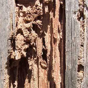 Termite FAQs