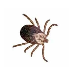 FAQ's About Ticks