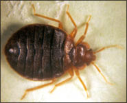 Get rid of bedbugs in Albany, Clifton Park, Saratoga Springs, the Adirondacks & VT!