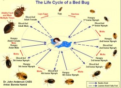 About Bedbugs Expert Bedbug Exterminators In New York Vermont