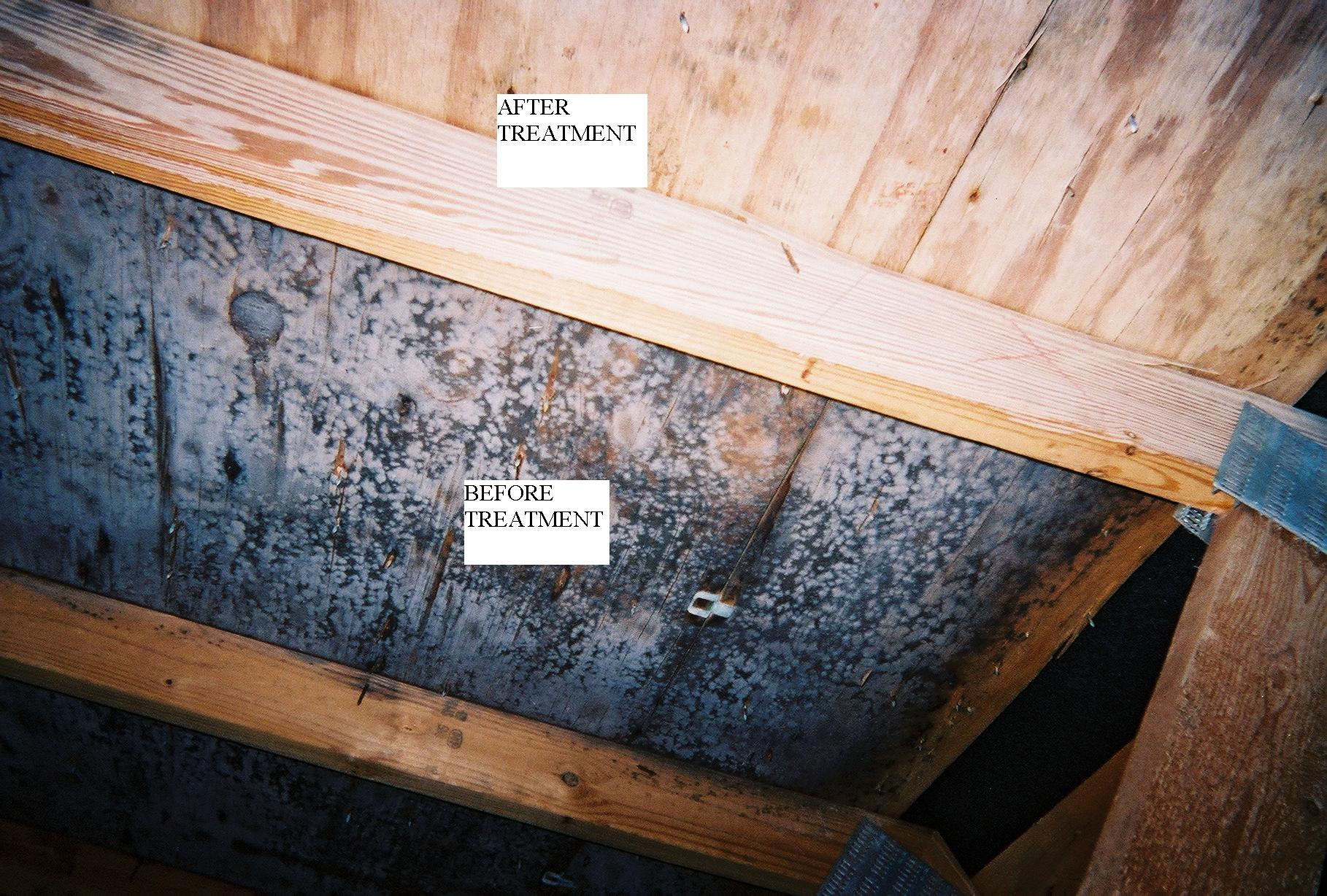Burlington Vermont Mold Remediation Whats In Your Bat