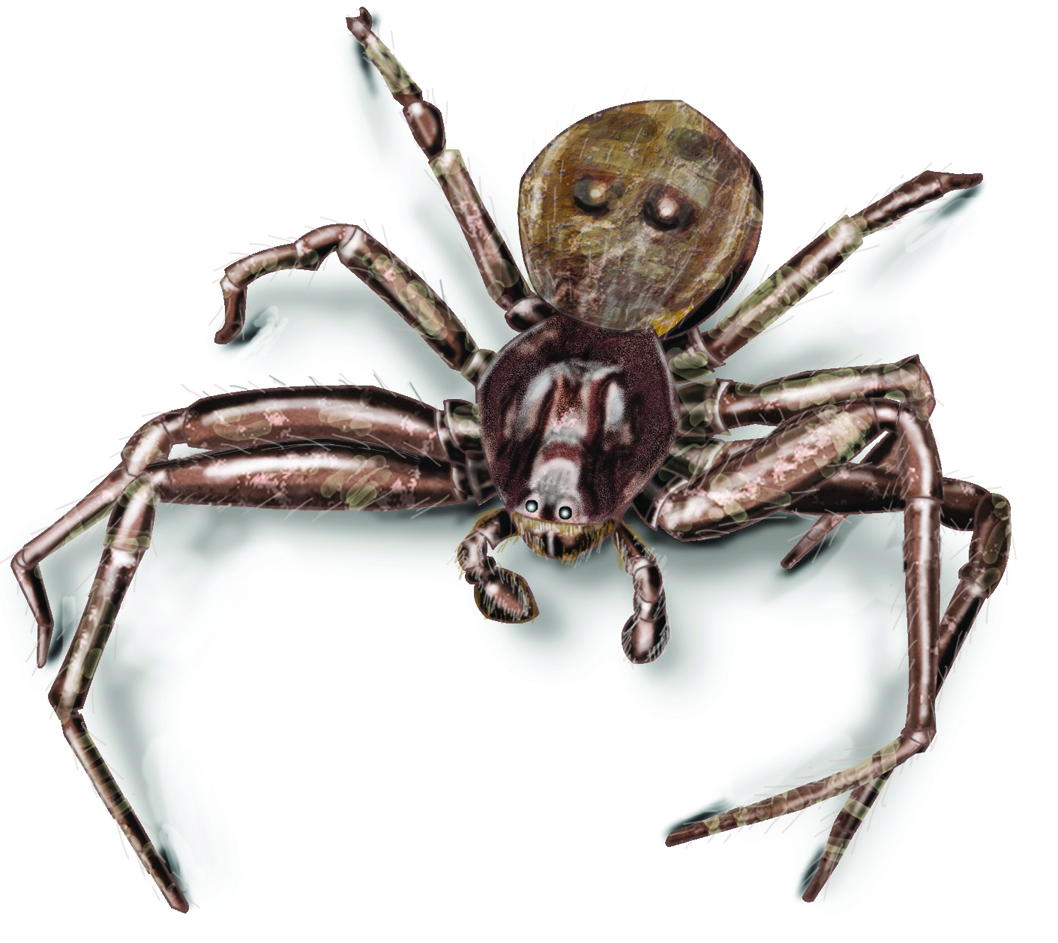 identify the most common spiders found in upstate ny and vermont