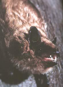 bat-contact