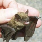 The Facts about Bats