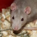 Professional Mice Exterminators in Plattsburgh, NY