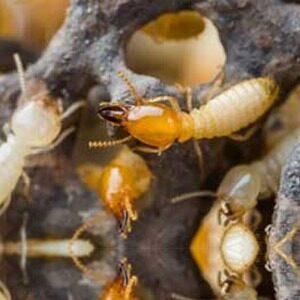 Pest Control Services Exterminators And Mold Remediation