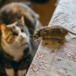 How to Get Rid of Mice in Your House