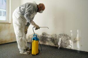 Mold Remediation Expert