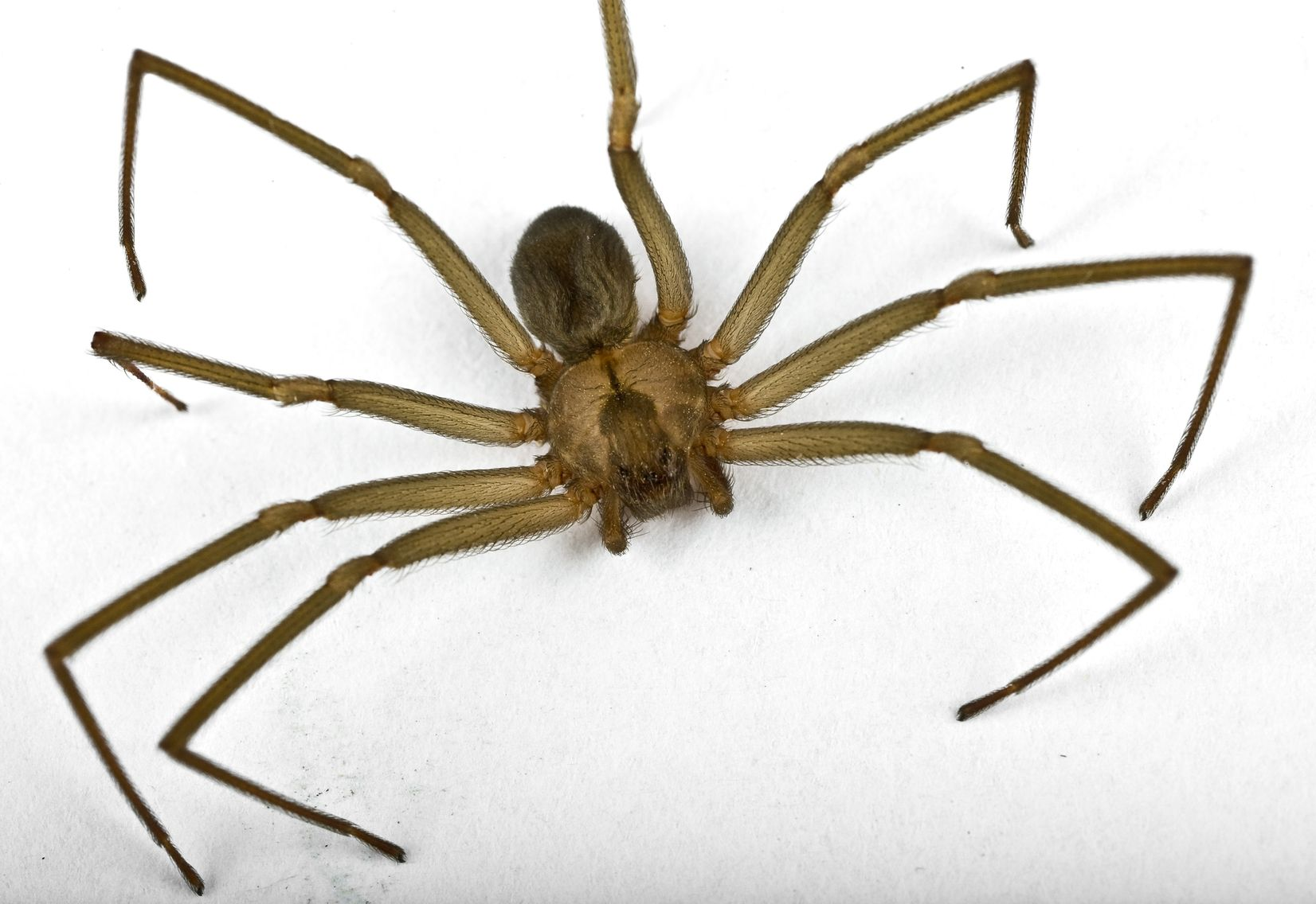 Poisonous Spiders In Ny Exterminators Serving Albany To Plattsburgh