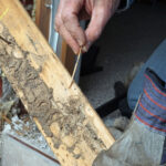 How to Determine if Your Home has Termites
