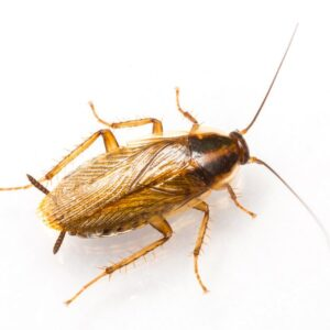 Are Cockroaches Making You Sick?
