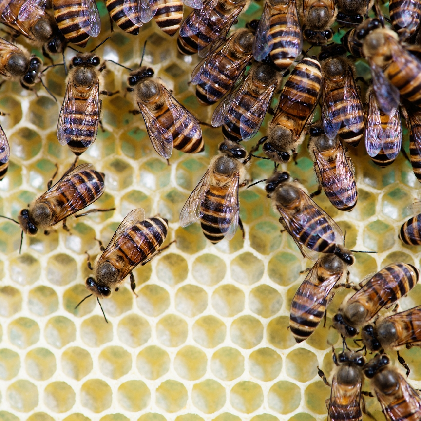 How To Get Rid Of Bees Amp Wasps Exterminator Services For